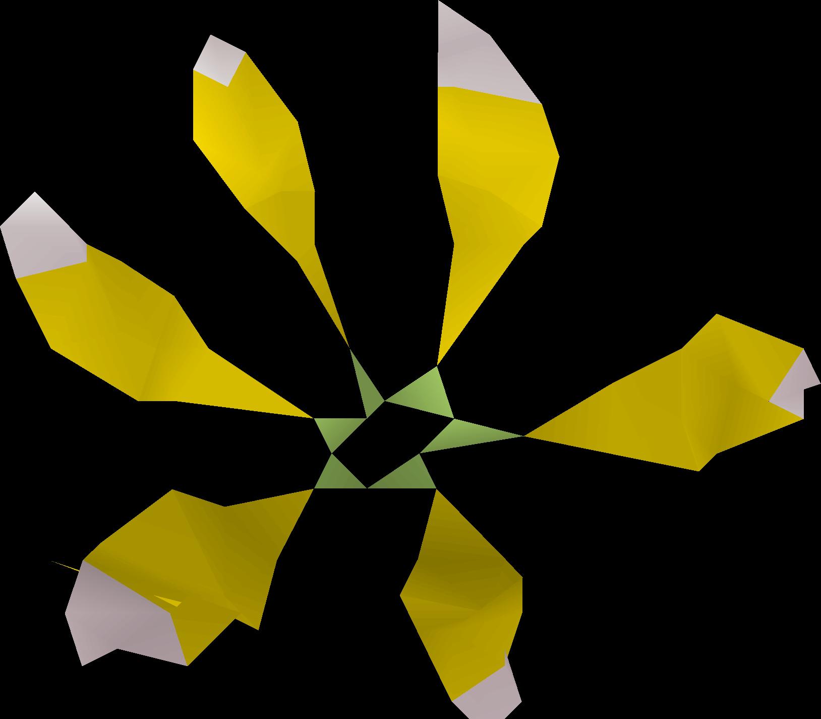 File:Star flower detail.png