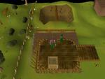 Emote clue - cry gnome agility arena