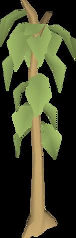 File:Teak tree.png