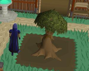 Spirit tree (Construction)