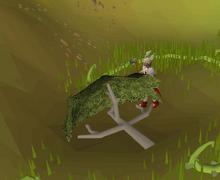 Chopping yommi tree