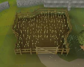Cooks' Guild wheat field