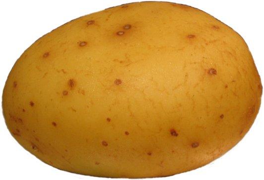 File:Potatofoogle.jpg