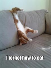 File:180px-Cat4.jpg