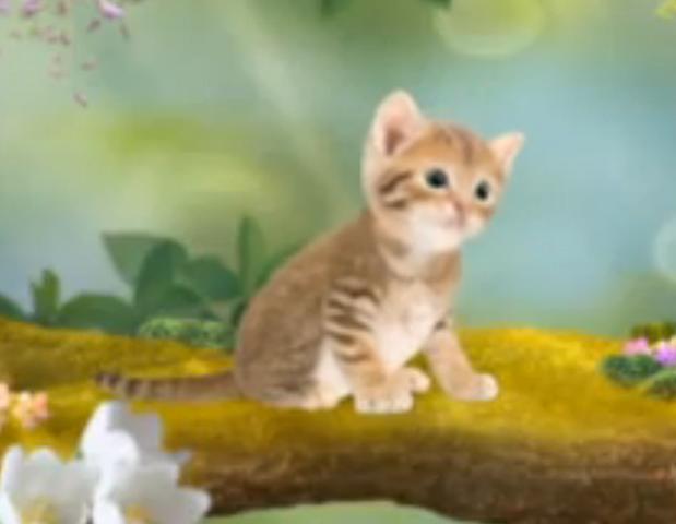 File:3rd & Bird Meow Kitty! Kitten.png