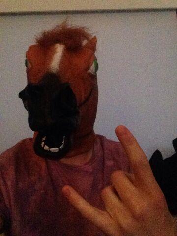 File:Rodney the Horse.jpg
