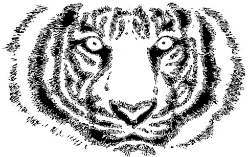 File:Tiger Cloth Pattern.png