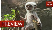 Fake monkey