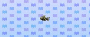 File:PopeyedGoldfish.jpg