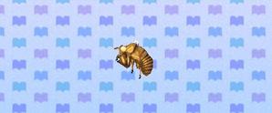 CicadaShell