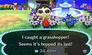 GrasshopperCatch