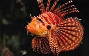 TurkeyfishIRL