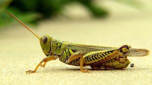 GrasshopperIRL