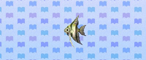 File:Angelfish.jpg