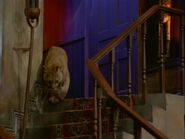 Afn kitty tree