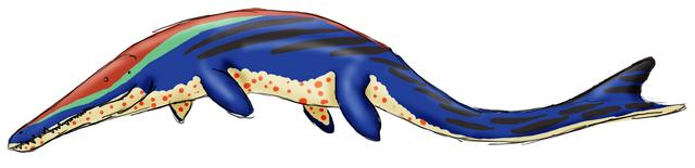 File:Metriorynchus.png