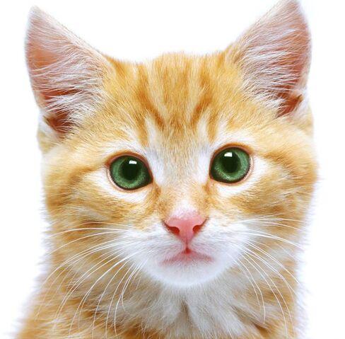 File:Meow.jpg