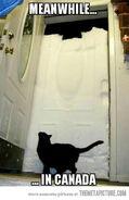 Funny-cat-door-snow