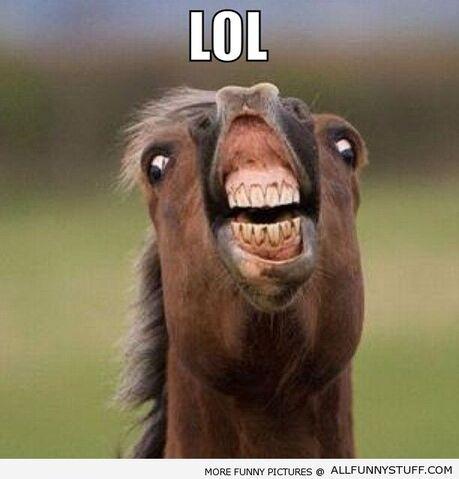 File:Funny-horse.jpg