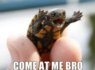 File:Come at me bro.png