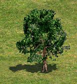 TreeJ