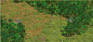 Jungle Lanes (2)