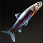 Bowfin Fish.png