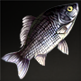 File:Top-Minnow.png