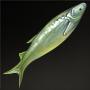 Bass Carp.png