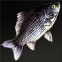 Guangxi Half Fish.png