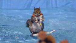 Twiggythewaterskiingsquirrel