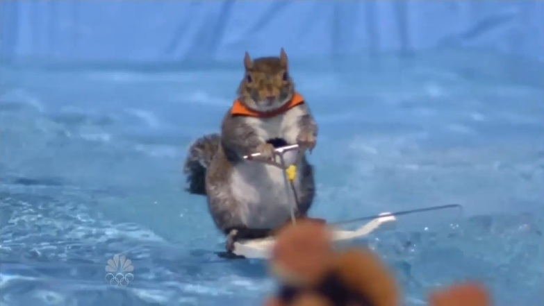 Twiggy the Waterskiing Squirrel | America's Got Talent ...