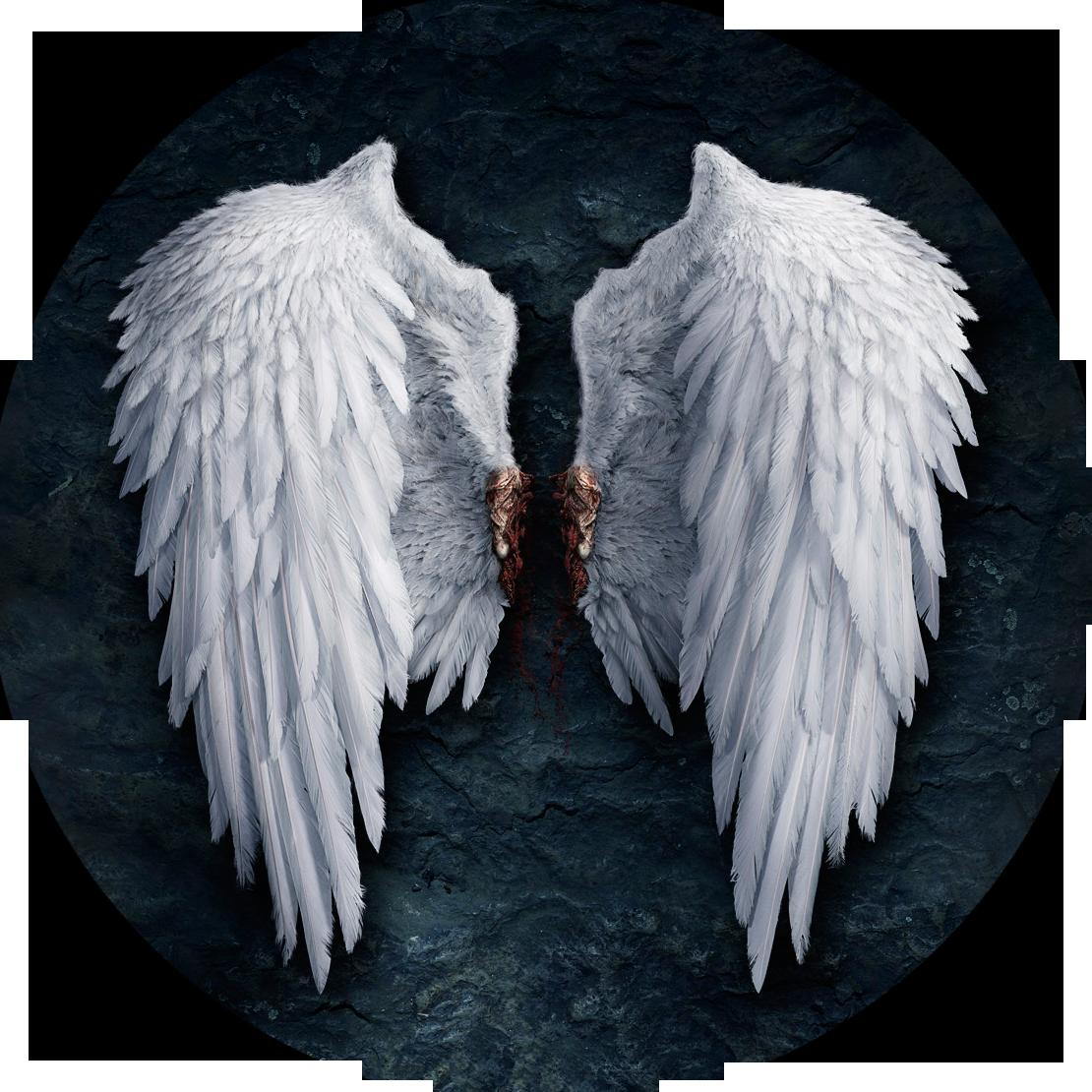 Wings | Aion Wiki | FANDOM powered by Wikia