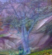 Okaru Tree