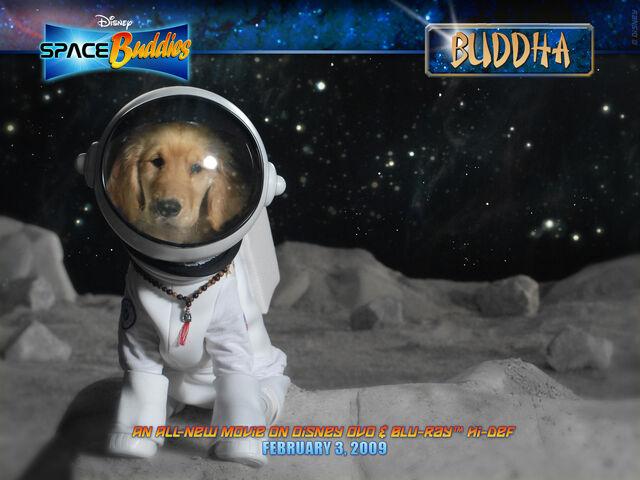 File:Buddha 1600x1200.jpg