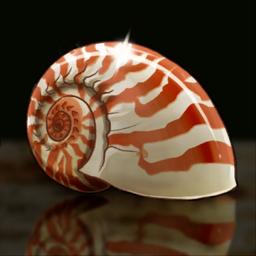Nautilus Shell Crop