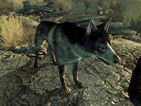 1000px-Dogmeat FO3