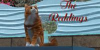 The Reddings