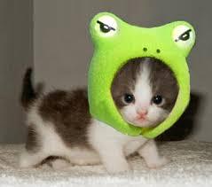 File:Frog hat kitten.jpg