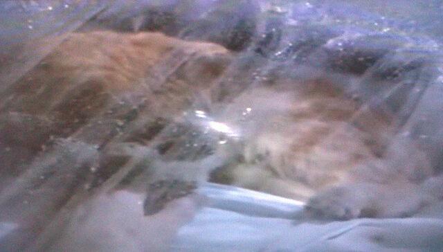 File:Jonesy in Hypersleep.jpg