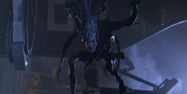File:AliensQueenArm dvd1.jpg