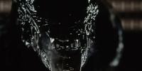 Cloned Xenomorph (USM Auriga)