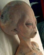 Gliese Grey dead body roswell