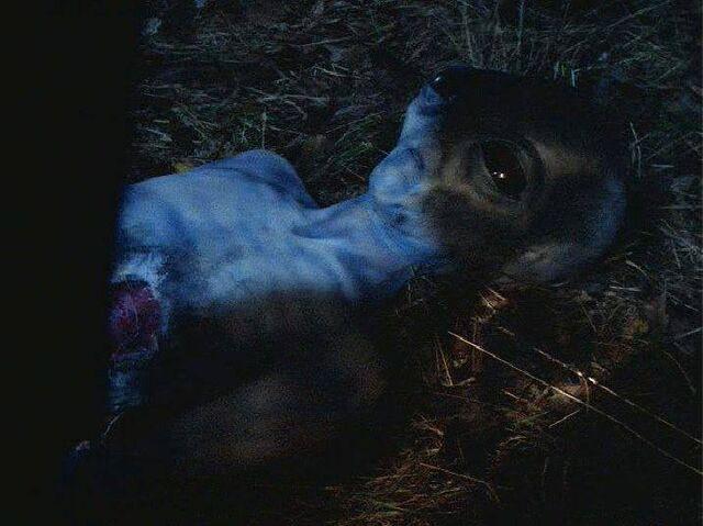 File:Rigel grey death killed by human.jpg