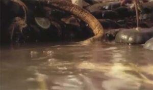 Scavian Slug