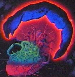 File:The Doom Tree.jpg
