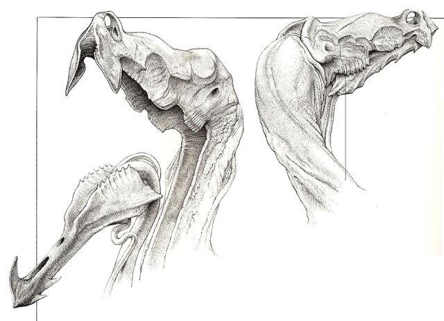 File:Daggerwrist head.JPG