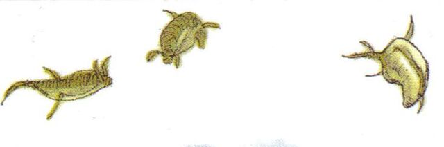 File:AcrobaticFish.jpg