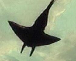 Felucian Flying Manta