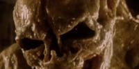 Newborn Xenomorph